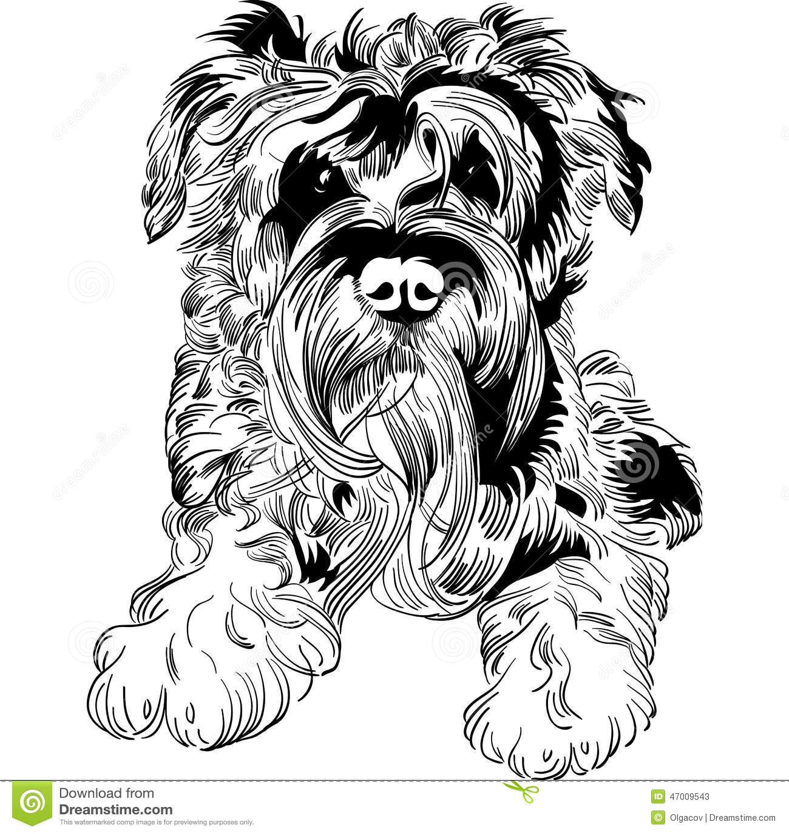 Schnauzer Drawing Easy: Vector Sketch Dog Schnauzer Breed Hand Drawing Vector