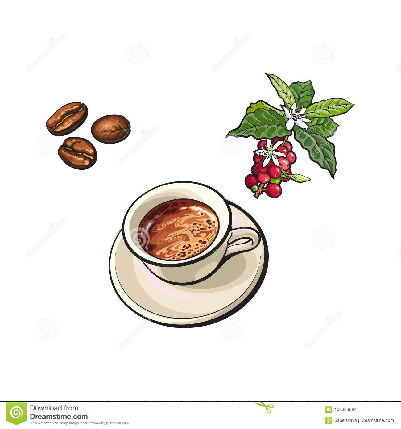 Vector Beans, Cup Of Coffee, Coffee Tree Branch Stock ...