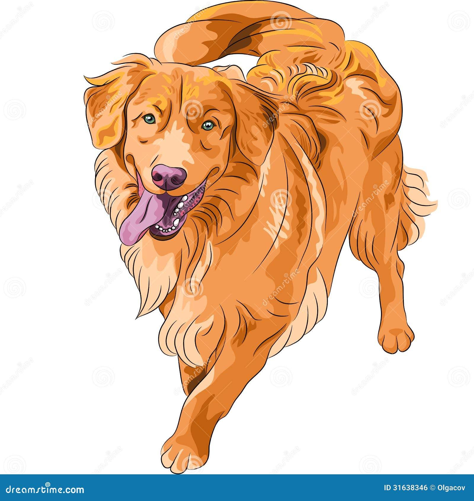 Funny Dog With Gun Gun hilarious funny dog