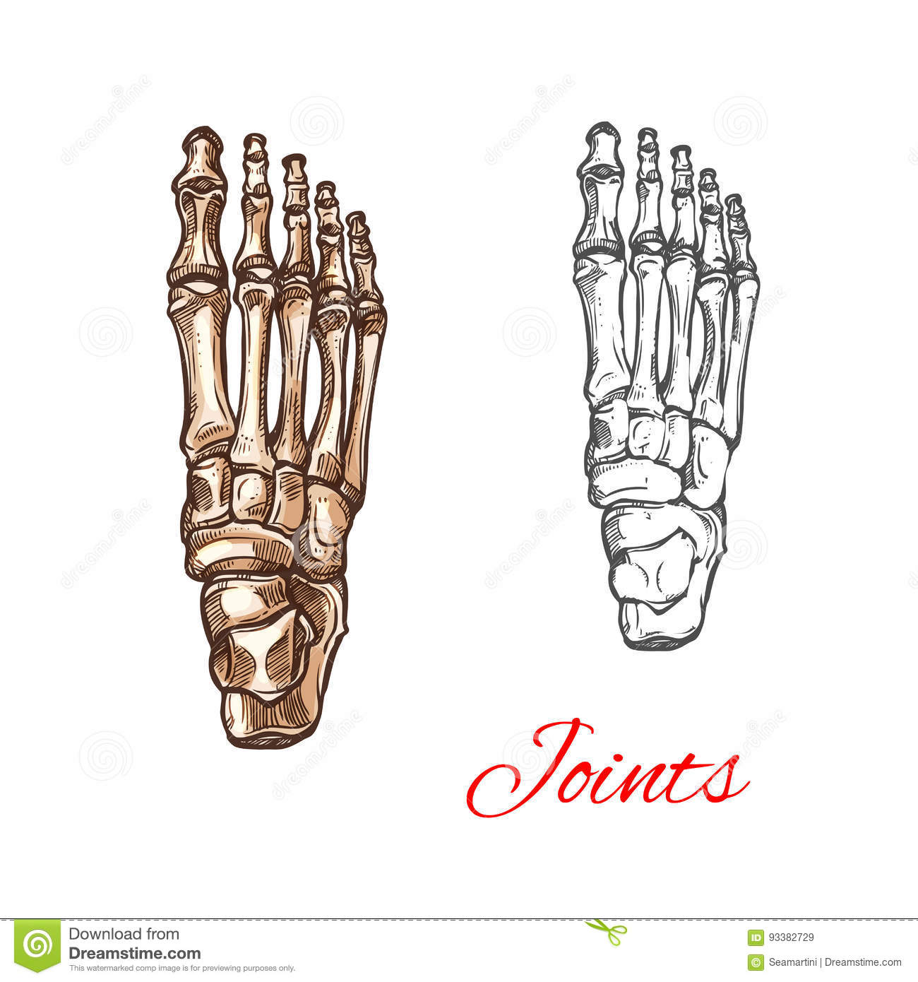 Vector Sketch Icon Of Human Foot Bones Or Joints Stock Vector ...