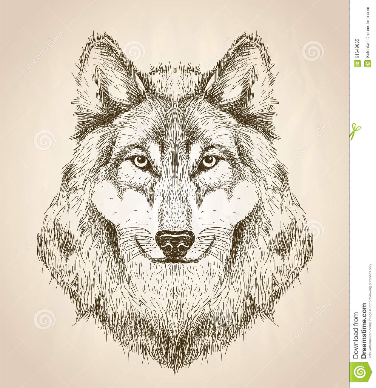 Vector Sketch Illustration Of A Wolf Head Front View