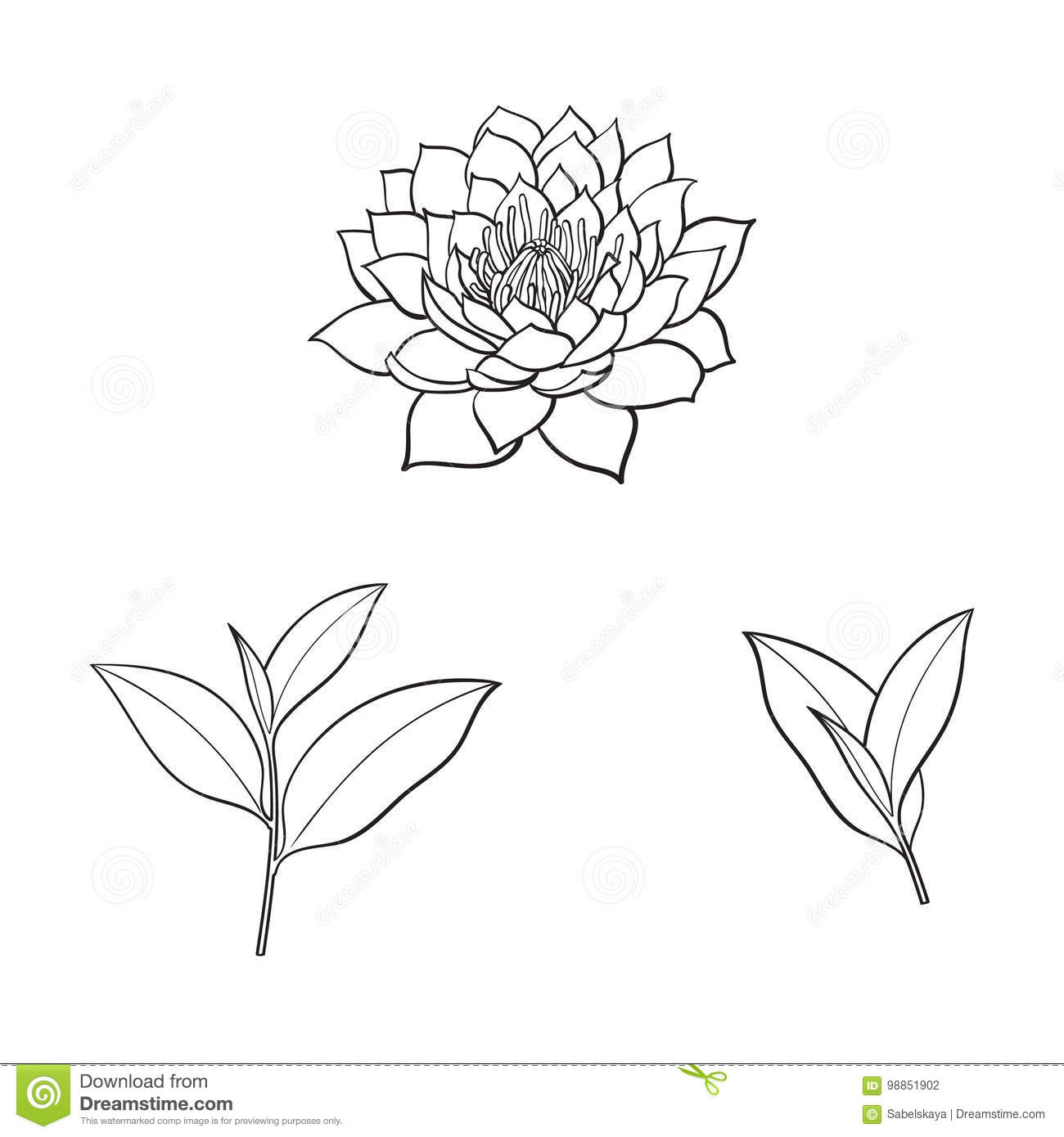 Vector sketch lotus flower tea leaves set stock vector download comp mightylinksfo