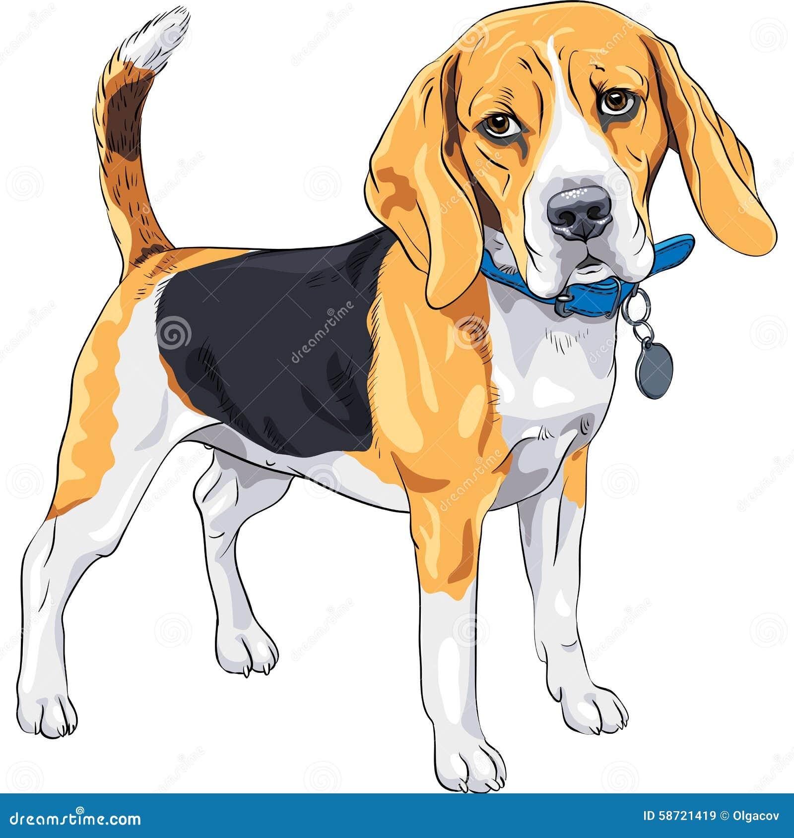 Blue Collar Dog Breed