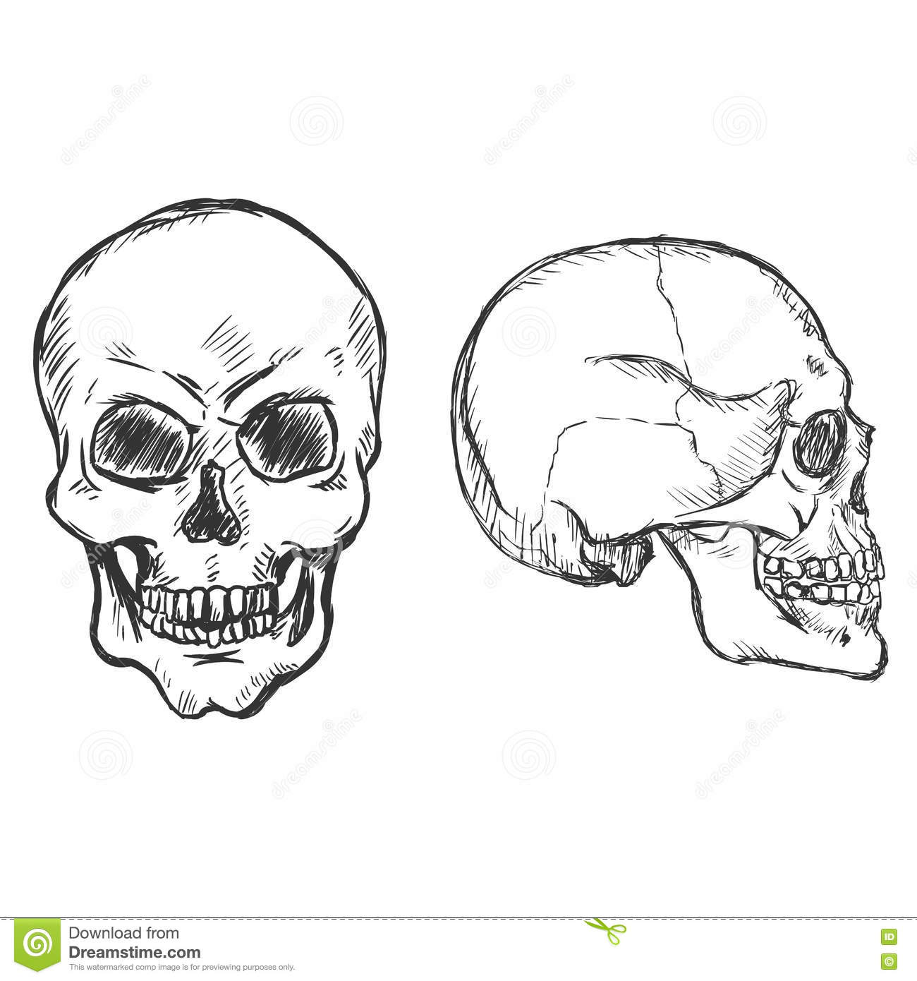 vector sketch skulls side and front view stock illustration
