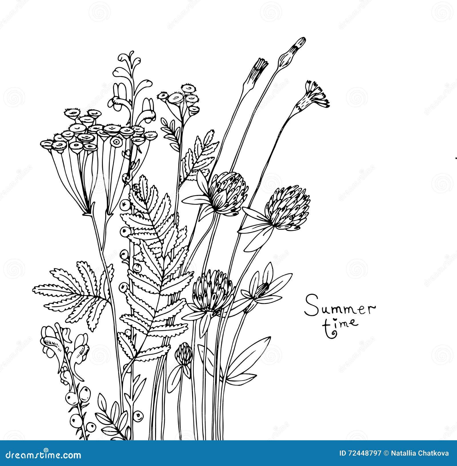 Wildflower Line Drawing : Vector sketch of the wildflowers cartoon