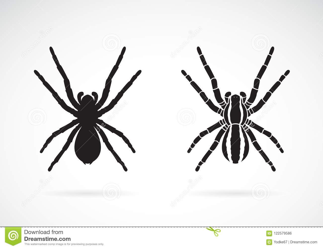 Vector Of Spider On White Background Insect Animal Stock