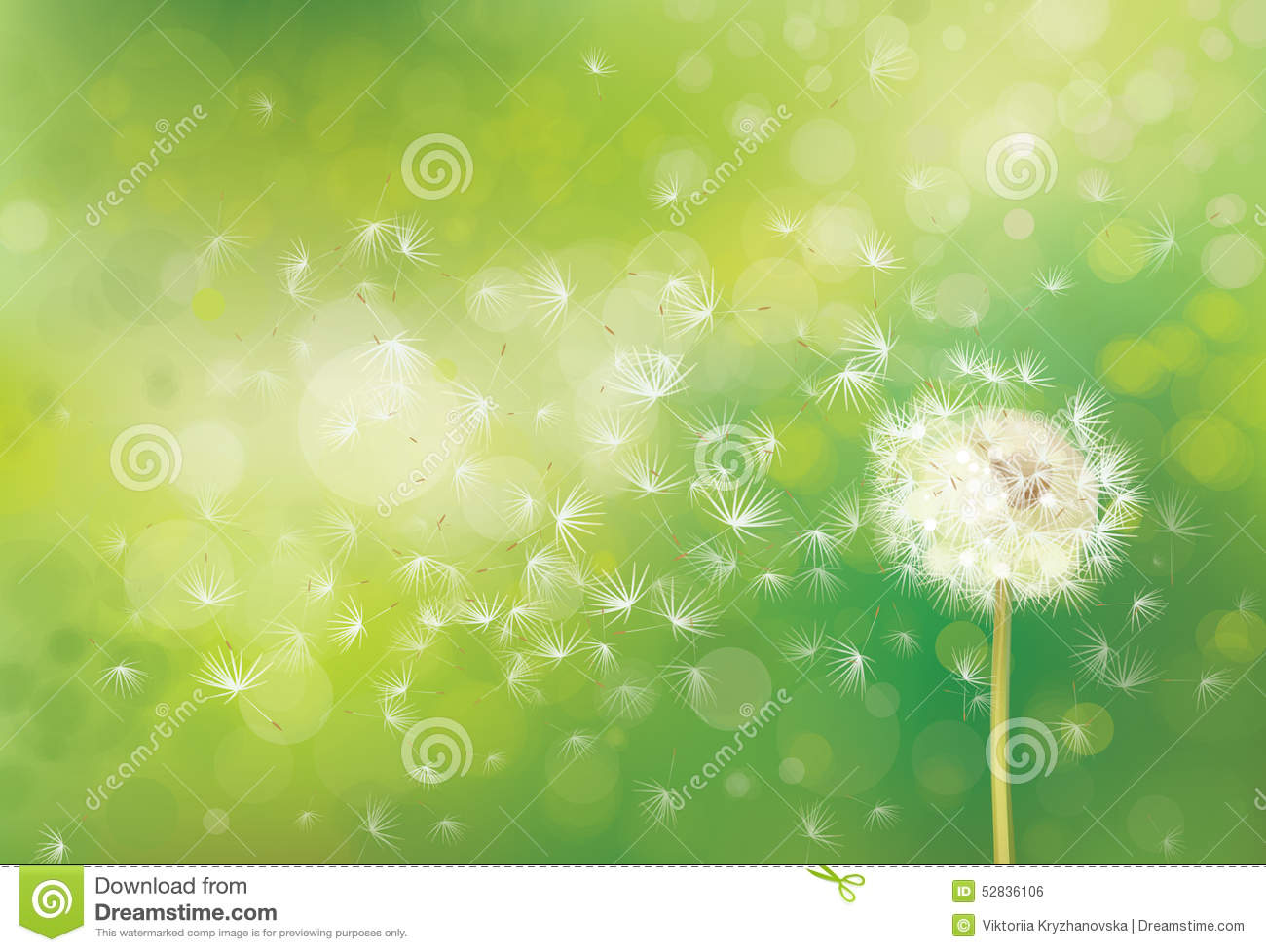 19617519483cd Vector Spring White Dandelion. Stock Vector - Illustration of ...