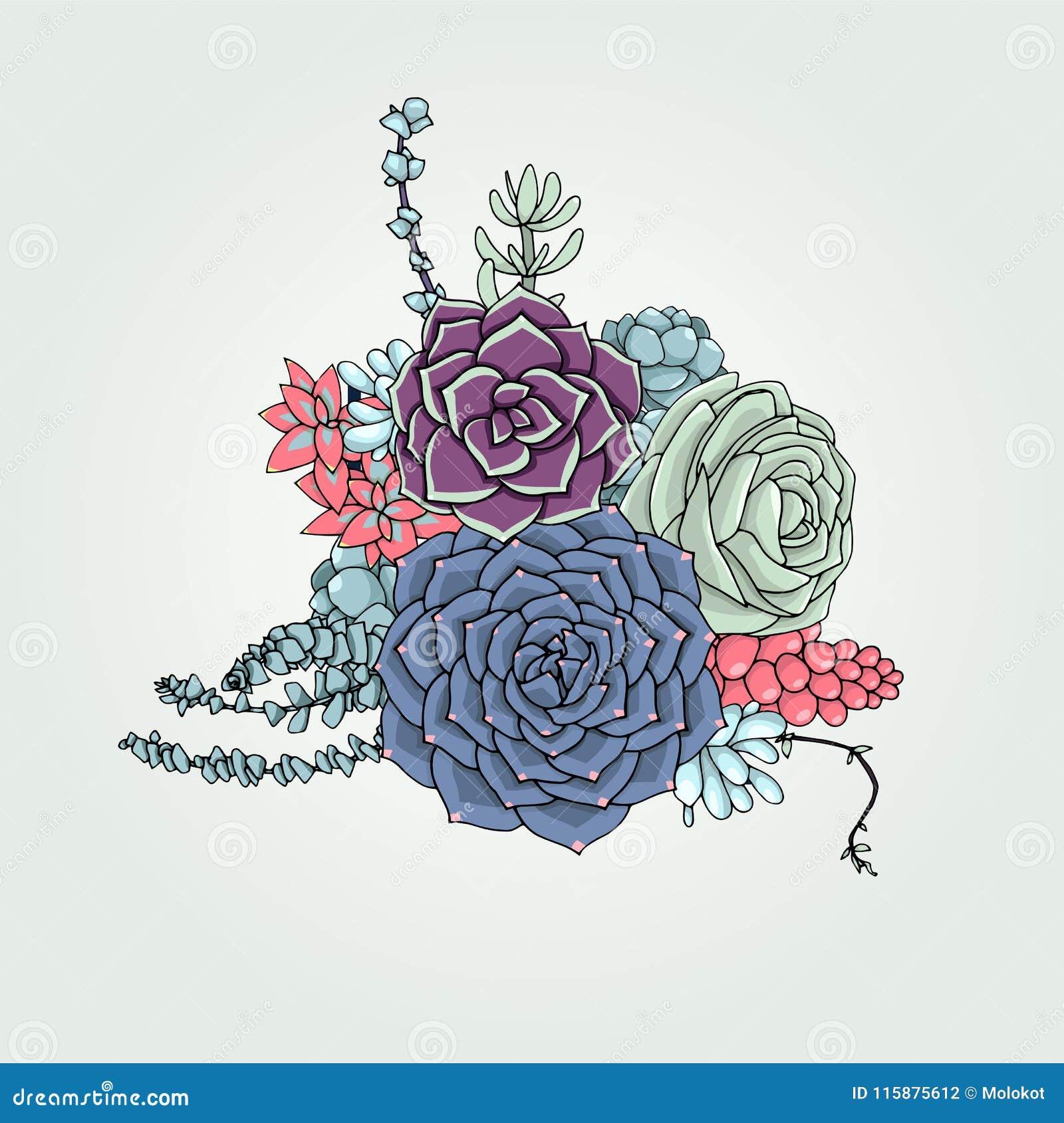 Vector Succulents Floral Composition Succulent Ornament Natur Stock Vector Illustration Of Arid Nature 115875612