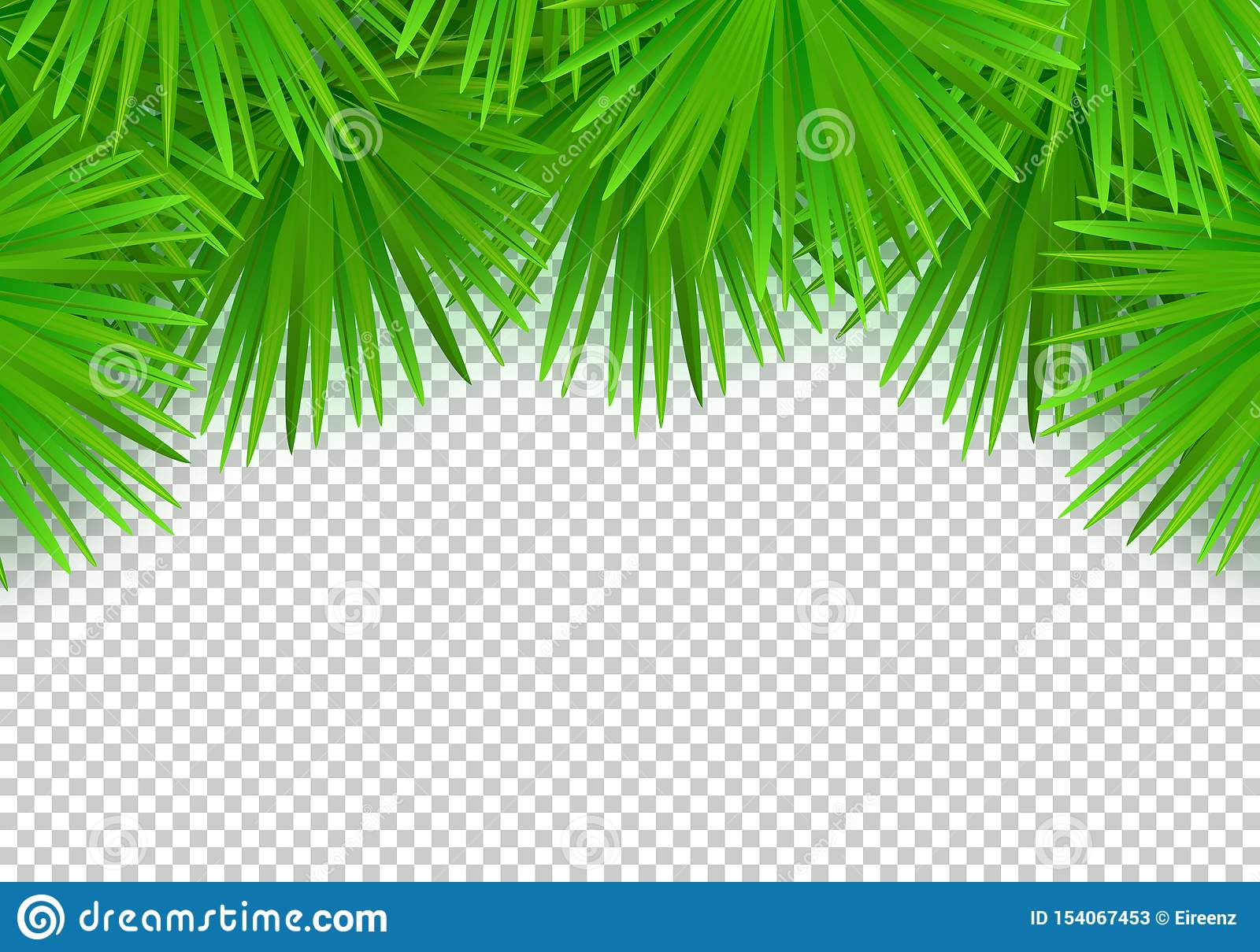 Vector Summer Palm Leaves On Transparent Background  Trendy