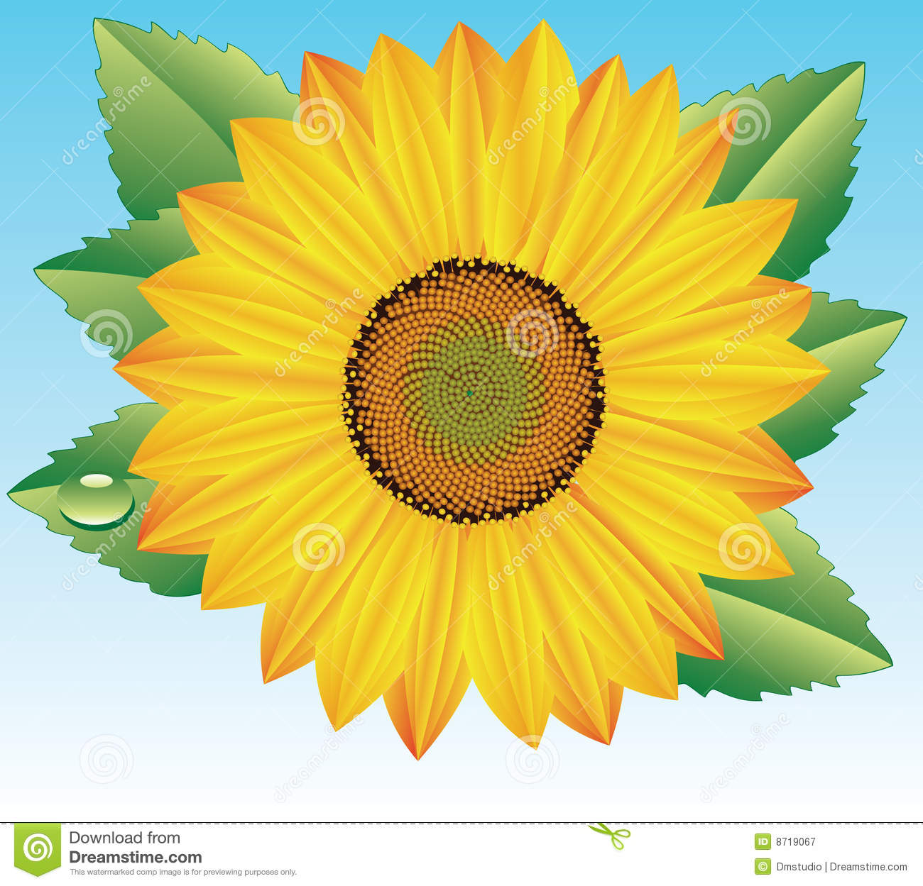 Vector Sunflower Royalty Free Stock Photography - Image ...