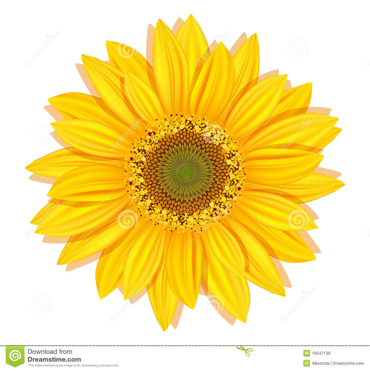 Vector sunflowers on a white background