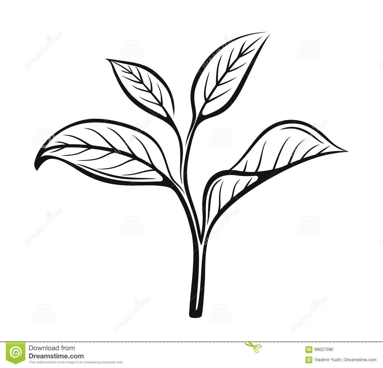 Vector tea leaves stock vector illustration of frame 99627596 download vector tea leaves stock vector illustration of frame 99627596 thecheapjerseys Image collections