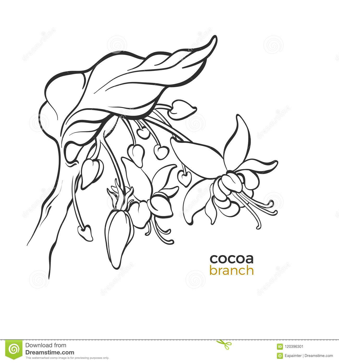 Vector template of cocoa tree branches stock illustration download vector template of cocoa tree branches stock illustration illustration of nature chocolate maxwellsz
