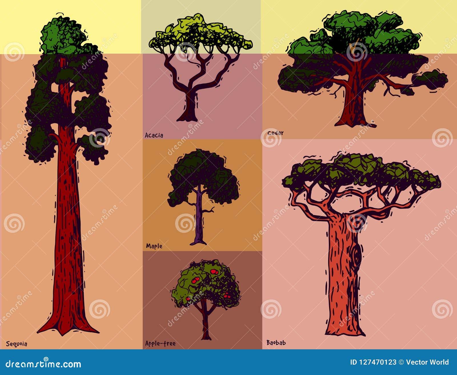 Vector tipos tirados mão coleção verde do estilo do esboço da árvore das copas de árvore do pinho da floresta do vidoeiro, o cedr
