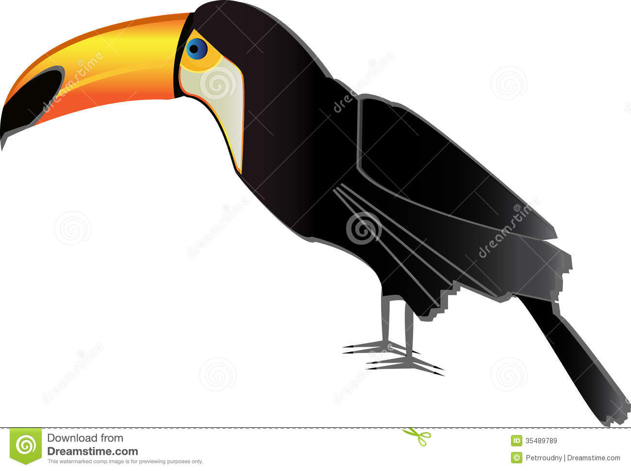 Toucan Bird Drawing Vector toucan