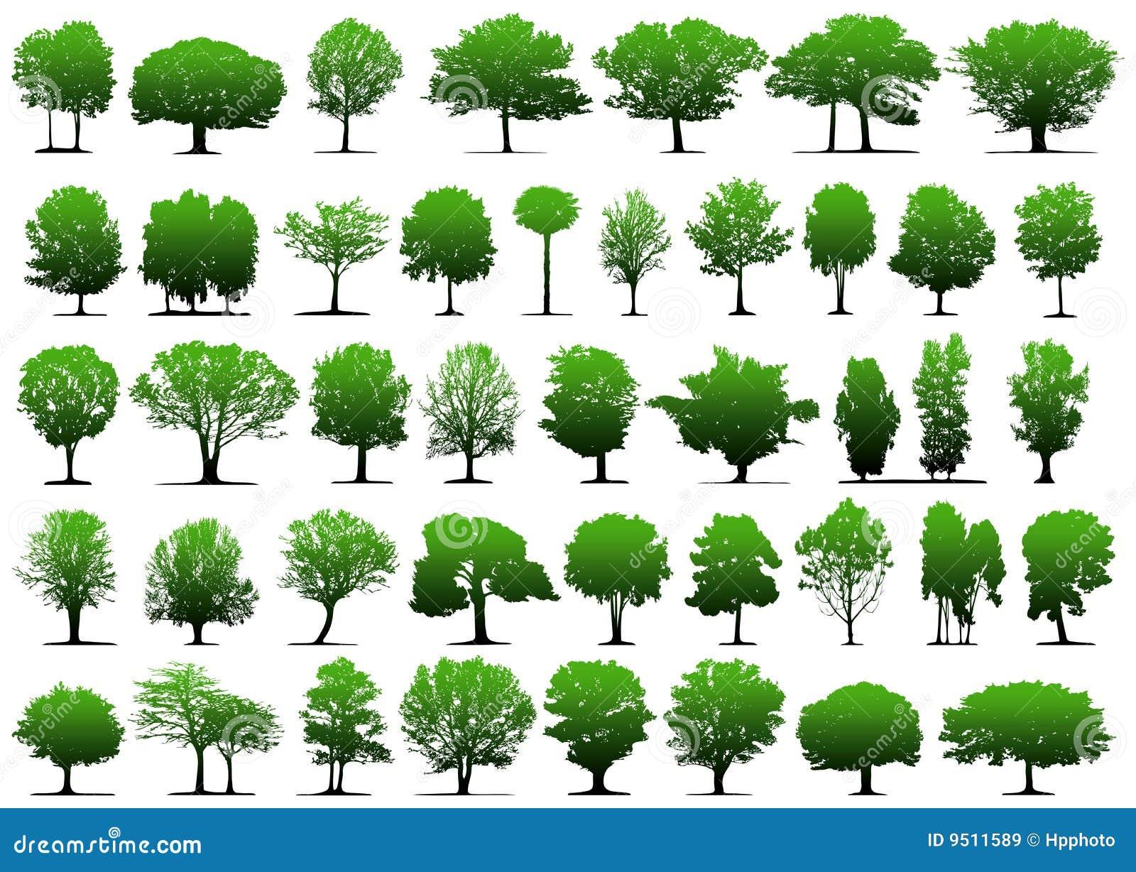Vector Illustration Tree: Vector Trees Stock Vector. Illustration Of Painting