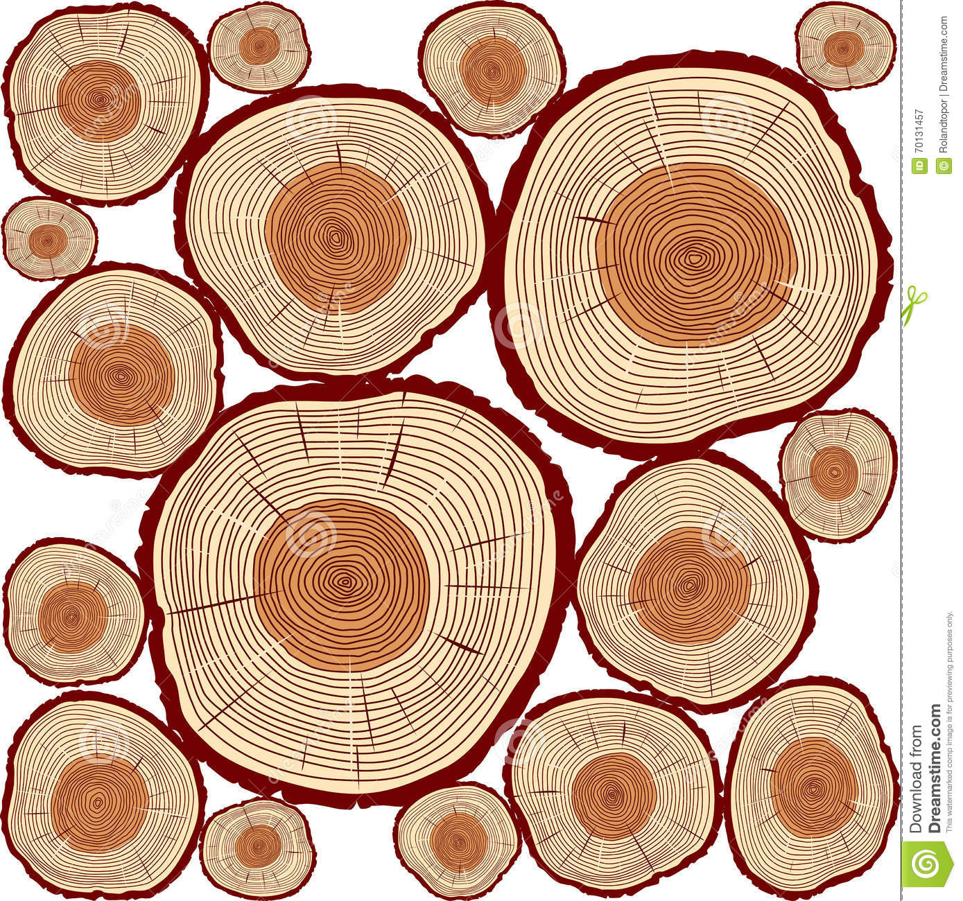 Vector Trunk and rings of Tree. Color Illustration.