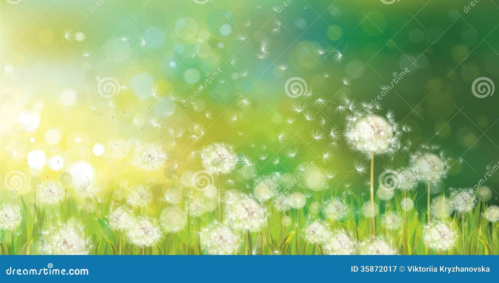 Vector van de lenteachtergrond met witte paardebloemen.