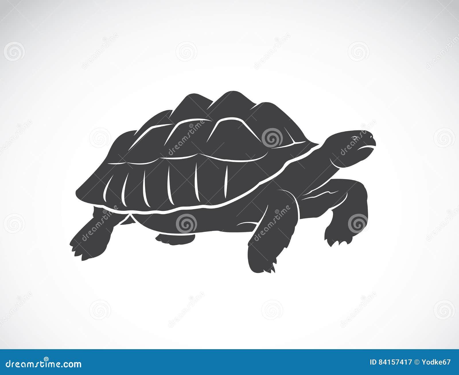 Vector van een schildpad op witte achtergrond reptiel