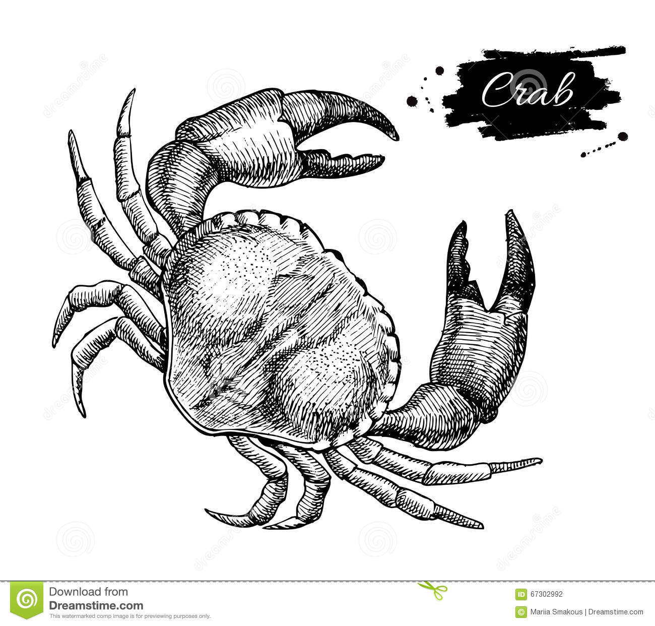 Ausmalbilder Ber Wale furthermore Facts Discovery additionally Temple Of Heaven In Beijing in addition 6478 furthermore Stock Illustration Vector Vintage Crab Drawing Hand Drawn Monochrome Seafood Illus Illustration Great Menu Poster Label Image67302992. on sea animal outline