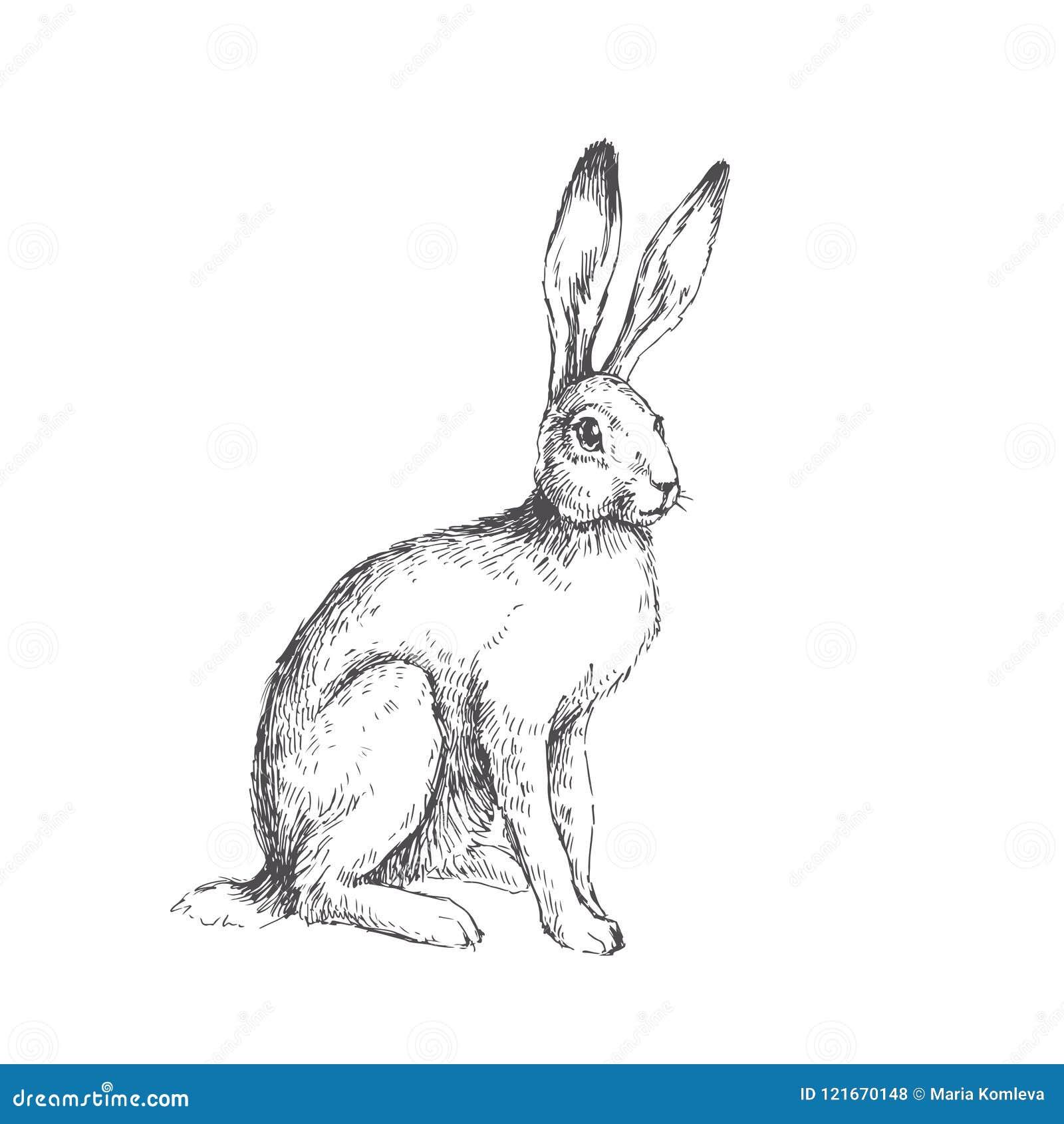 Vintage Hare Illustration