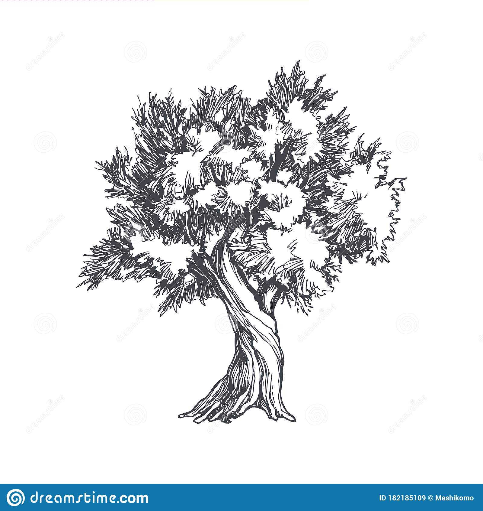 Vector Vintage Illustration Of Tree In Engraving Style Hand Drawn Botanical Sketch With Olive Plant Isolated On White Background Stock Vector Illustration Of Nature Drawn 182185109