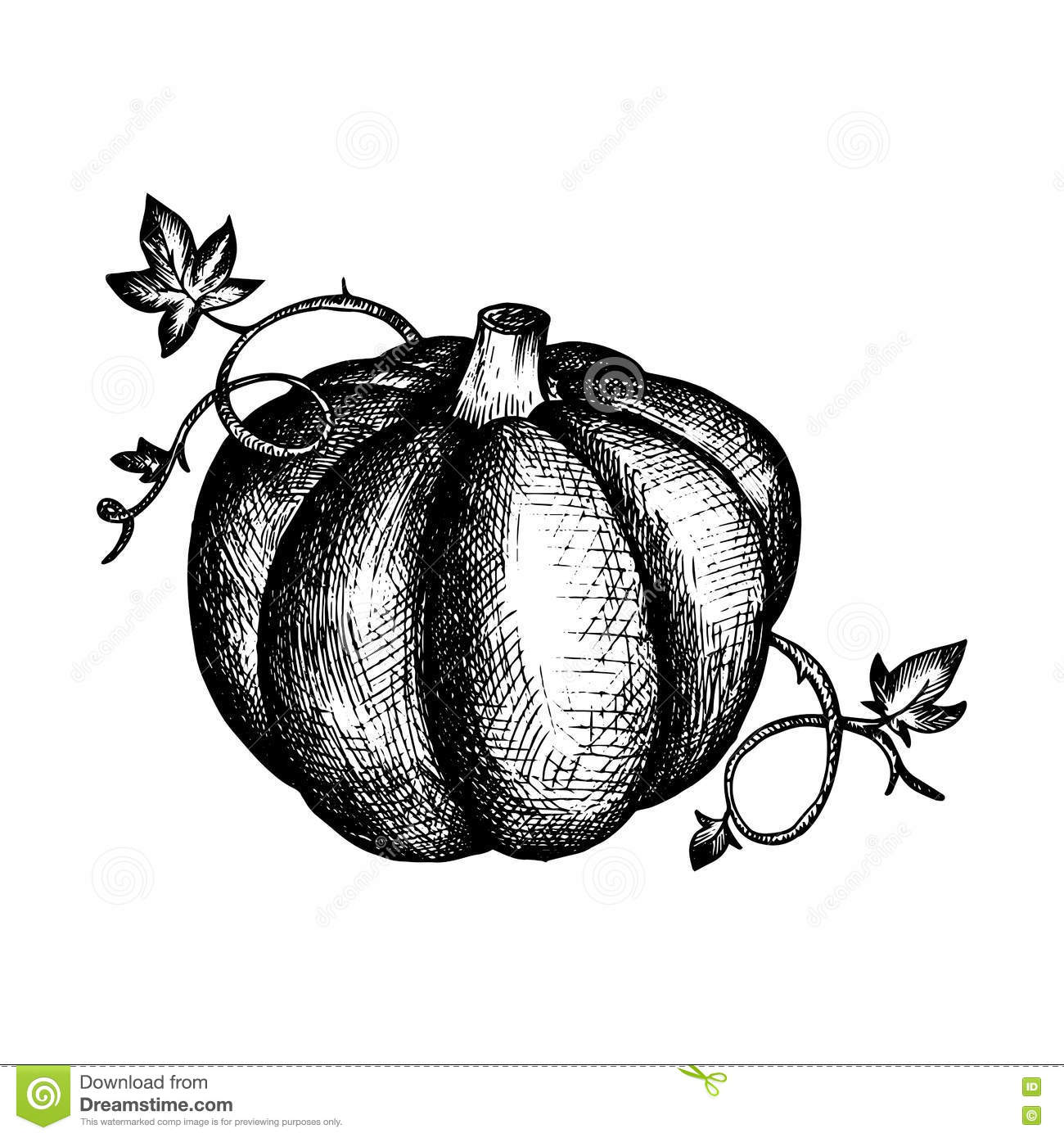 Vector Vintage Pumpkin And Leaves Stock Vector