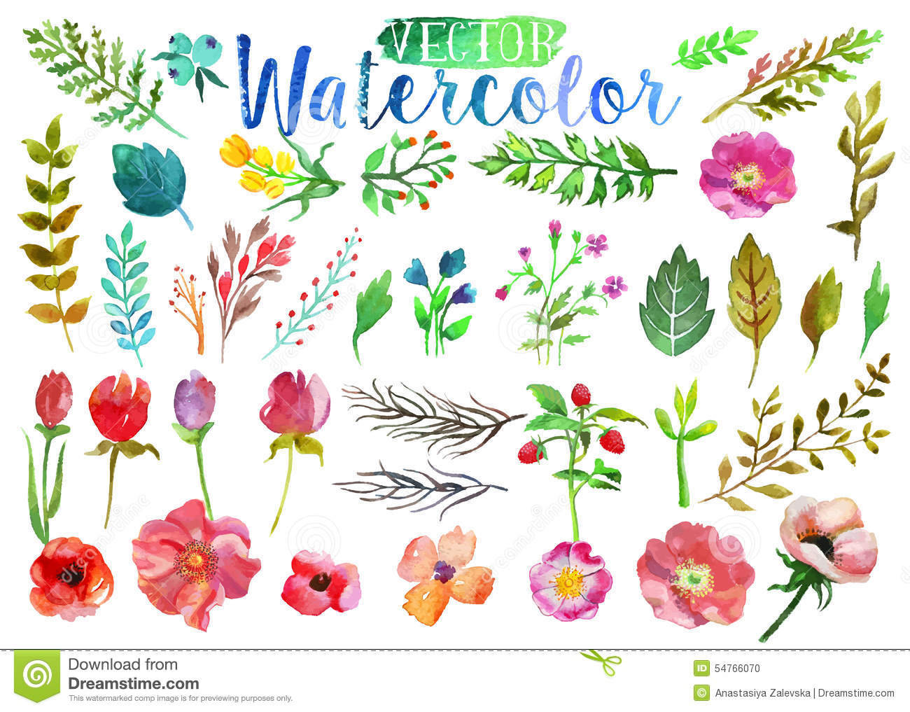 Vector Watercolor Aquarelle Flowers And Leaves. Stock ...