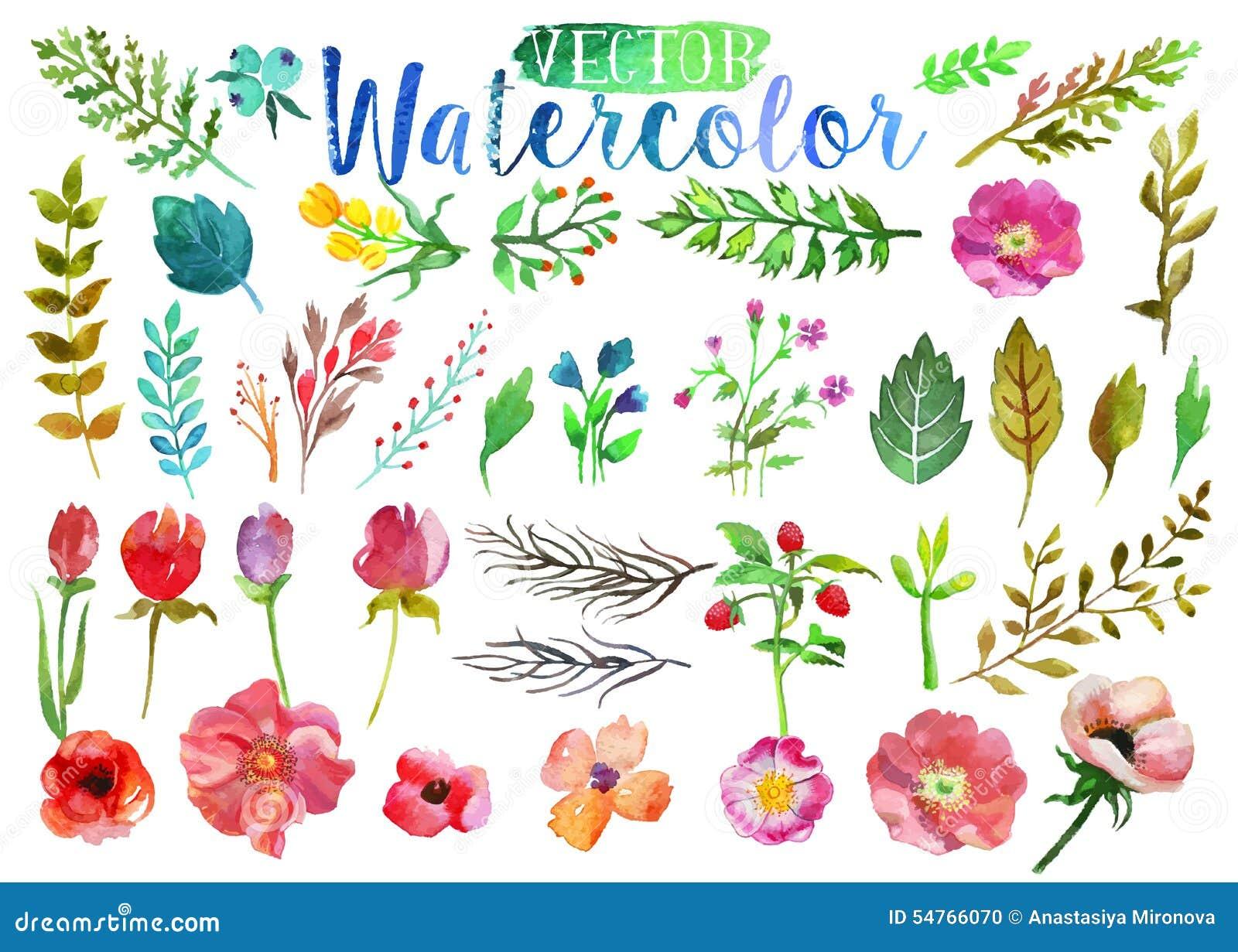 flowers stock illustrations  , flowers stock illustrations, Natural flower