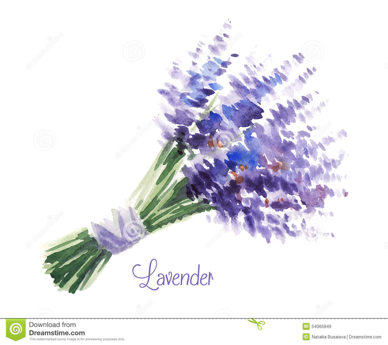 Delicate watercolor bouquet of lavender. Illustration for greeting ...