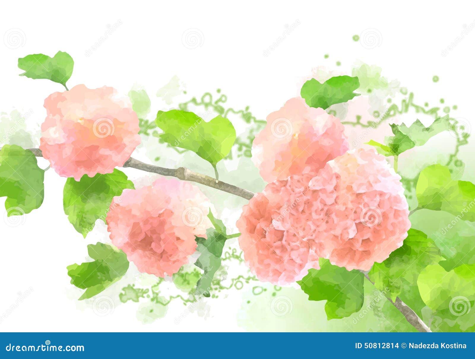 Vector Watercolor Flowers Hydrangea Stock Vector - Image ...