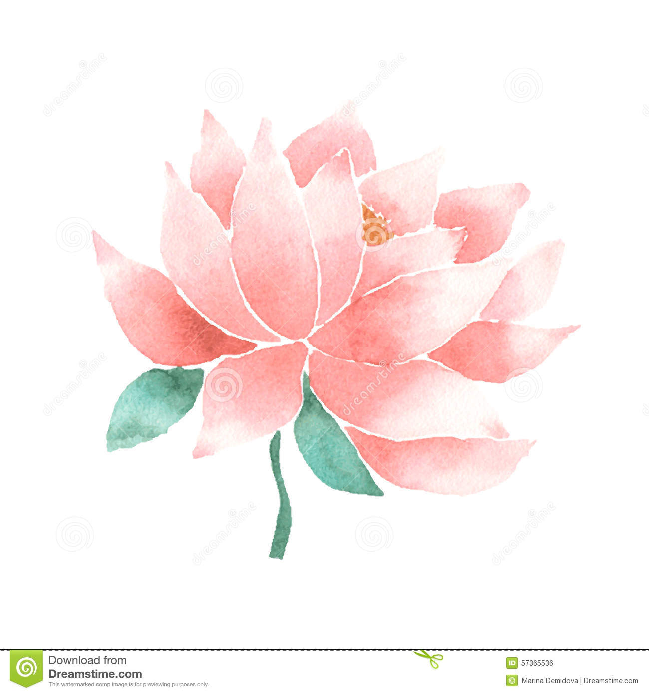 Vector Watercolor Lotus Flower Pink Stock Vector Illustration Of