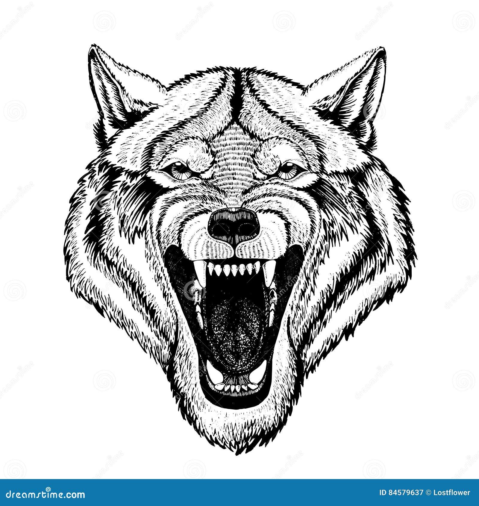 Vector wilden Wolf für Tätowierung, T-Shirt, Sportlogo