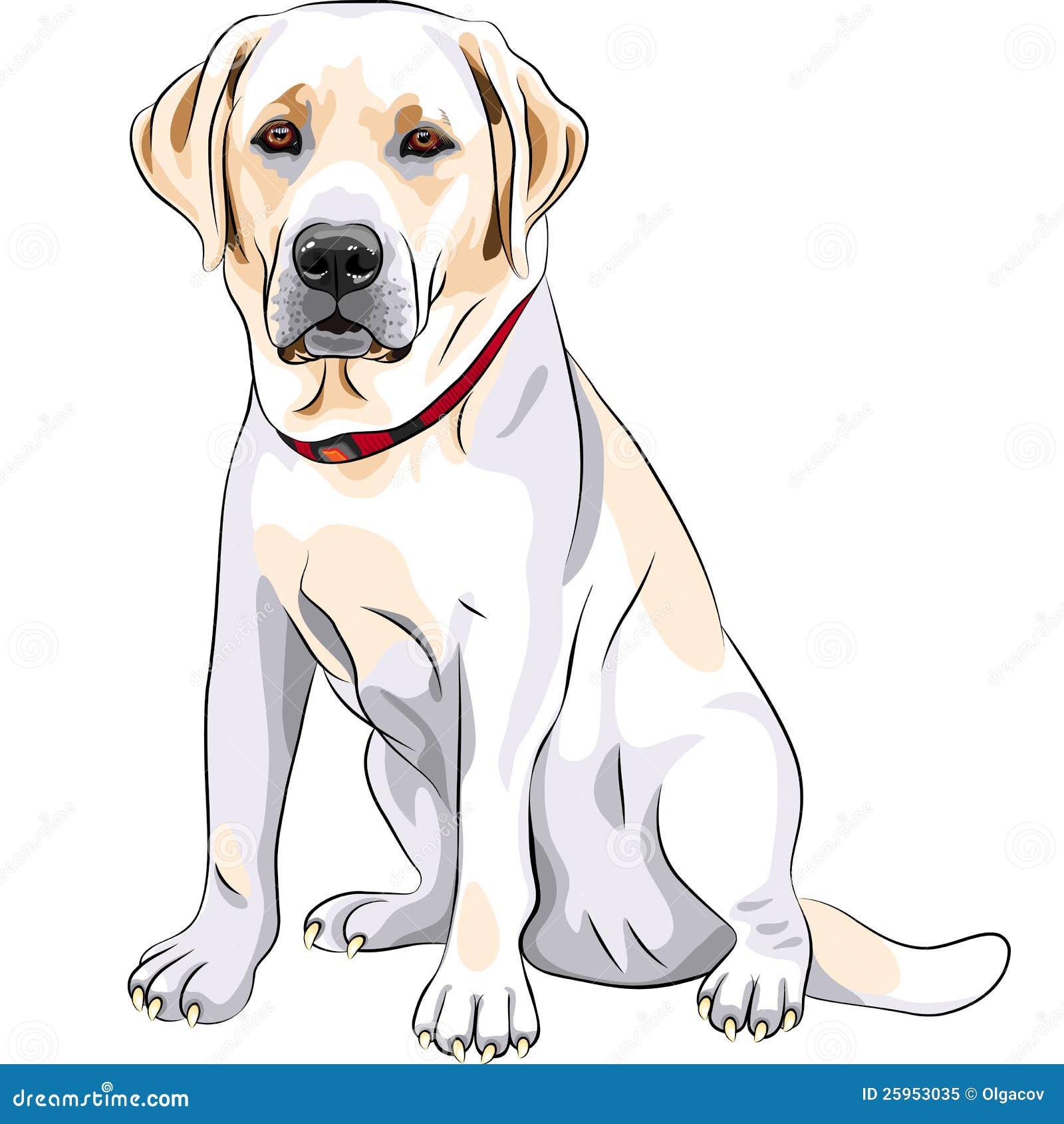 Vector Yellow Dog Breed Labrador Retriever Sitting Royalty