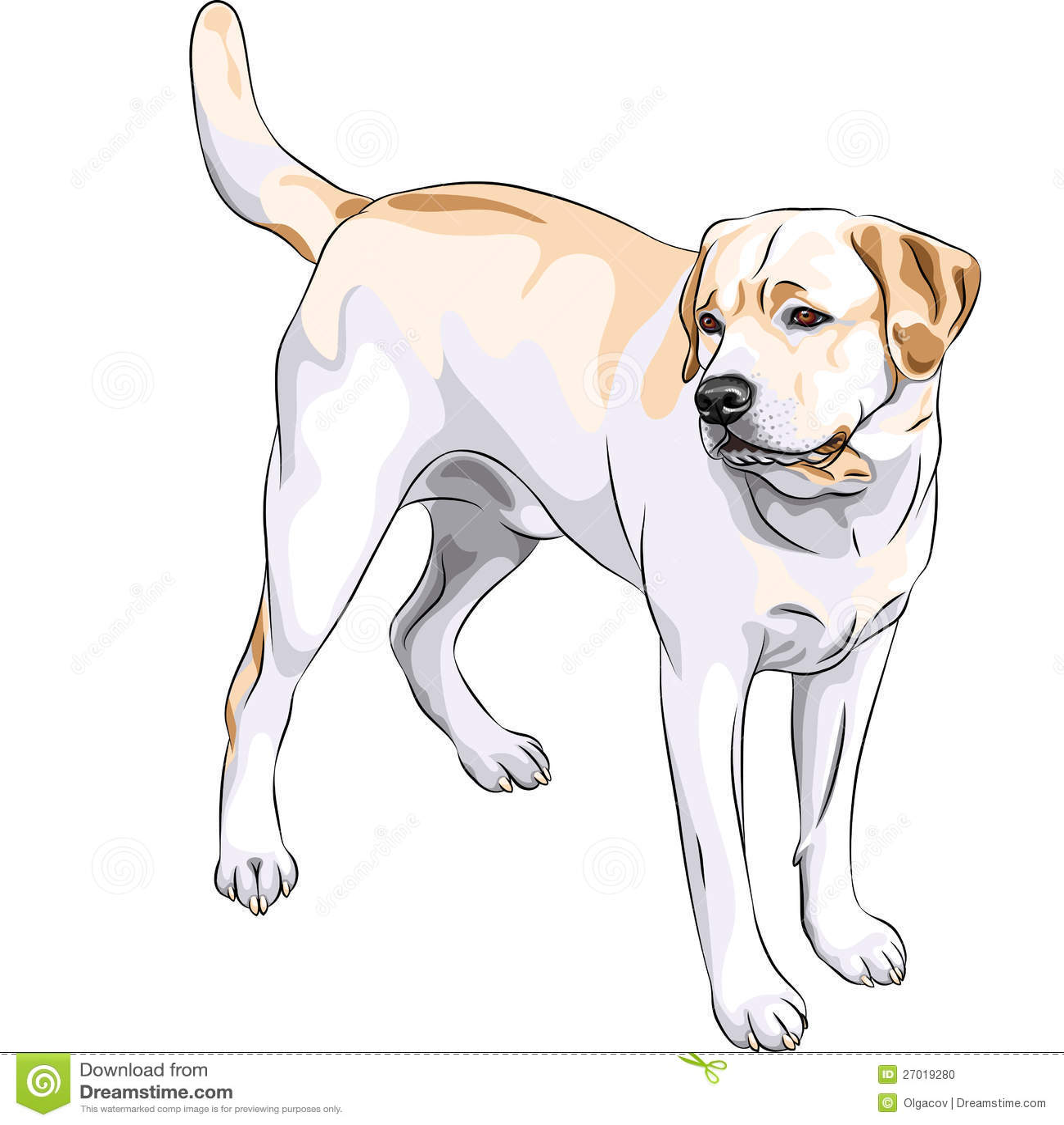 Labrador Retriever Yellow With Big Tail. Stock Image - Image of ...