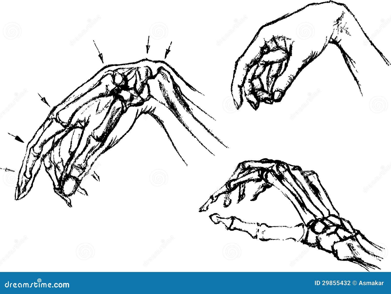 Anatomie Des Menschlichen Körpers Vektor Abbildung - Illustration ...