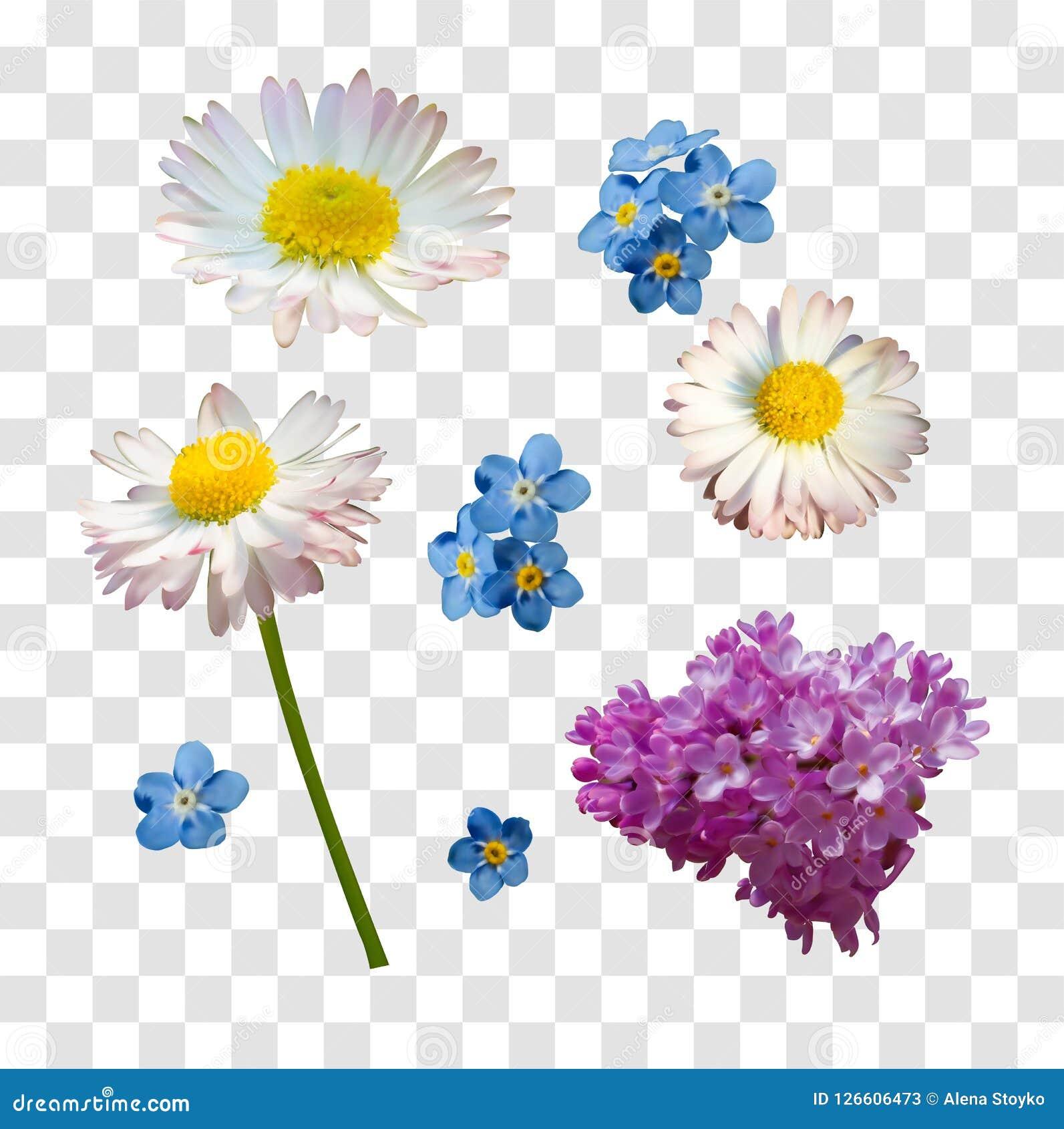 Vectordiereeks takken van lilac madeliefje en vergeet-mij-nietjebloemen op een witte achtergrond worden geïsoleerd