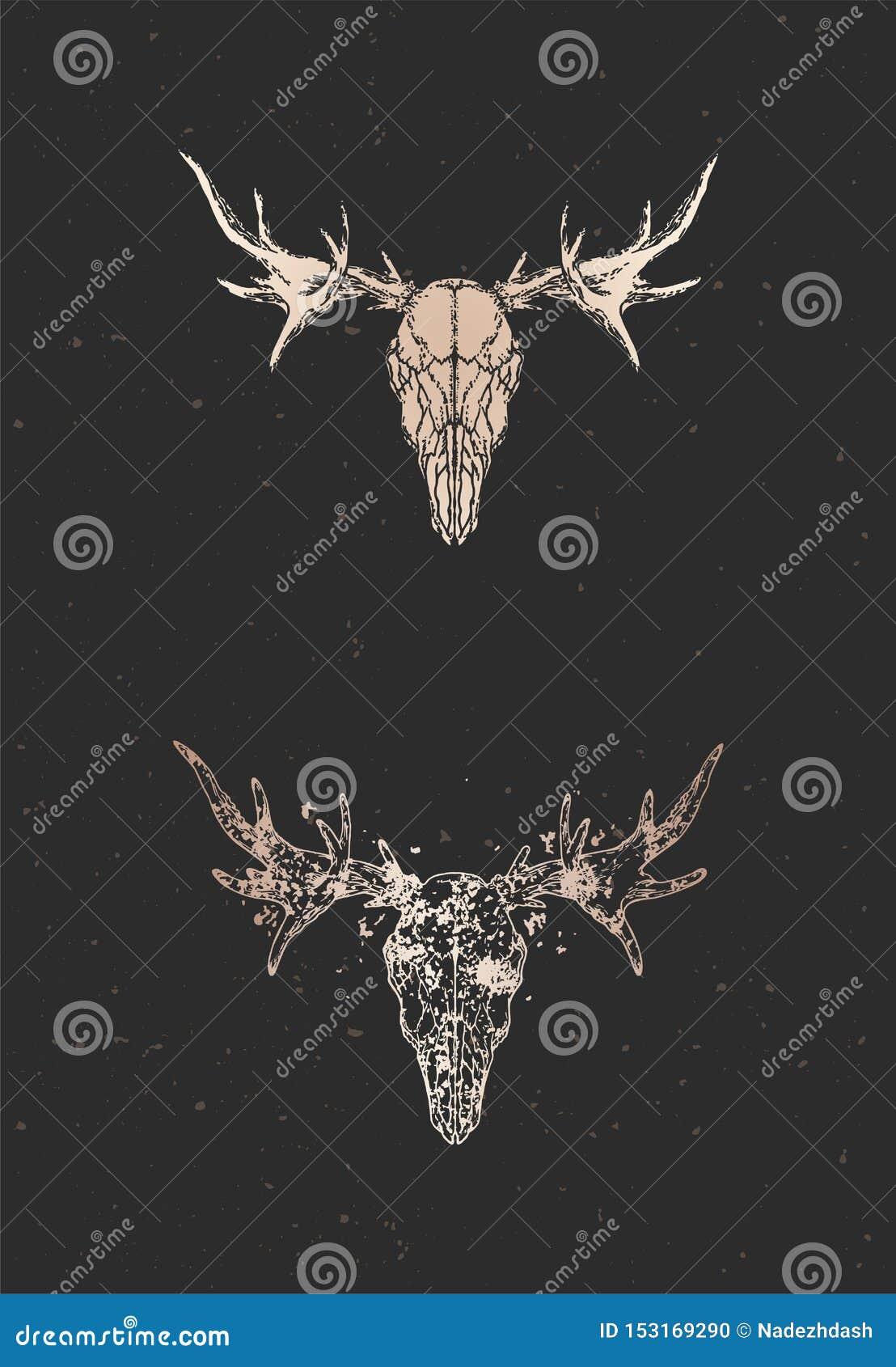 Vectorillustratie met twee varianten van hand getrokken Amerikaanse elandenschedel op zwarte achtergrond Gouden silhouetten en co