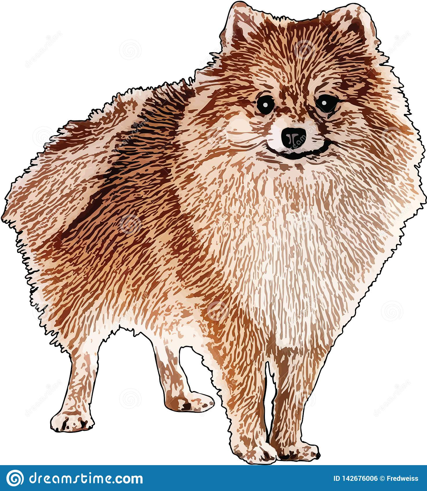 Vectorillustratie van een Pomeranian-Hond