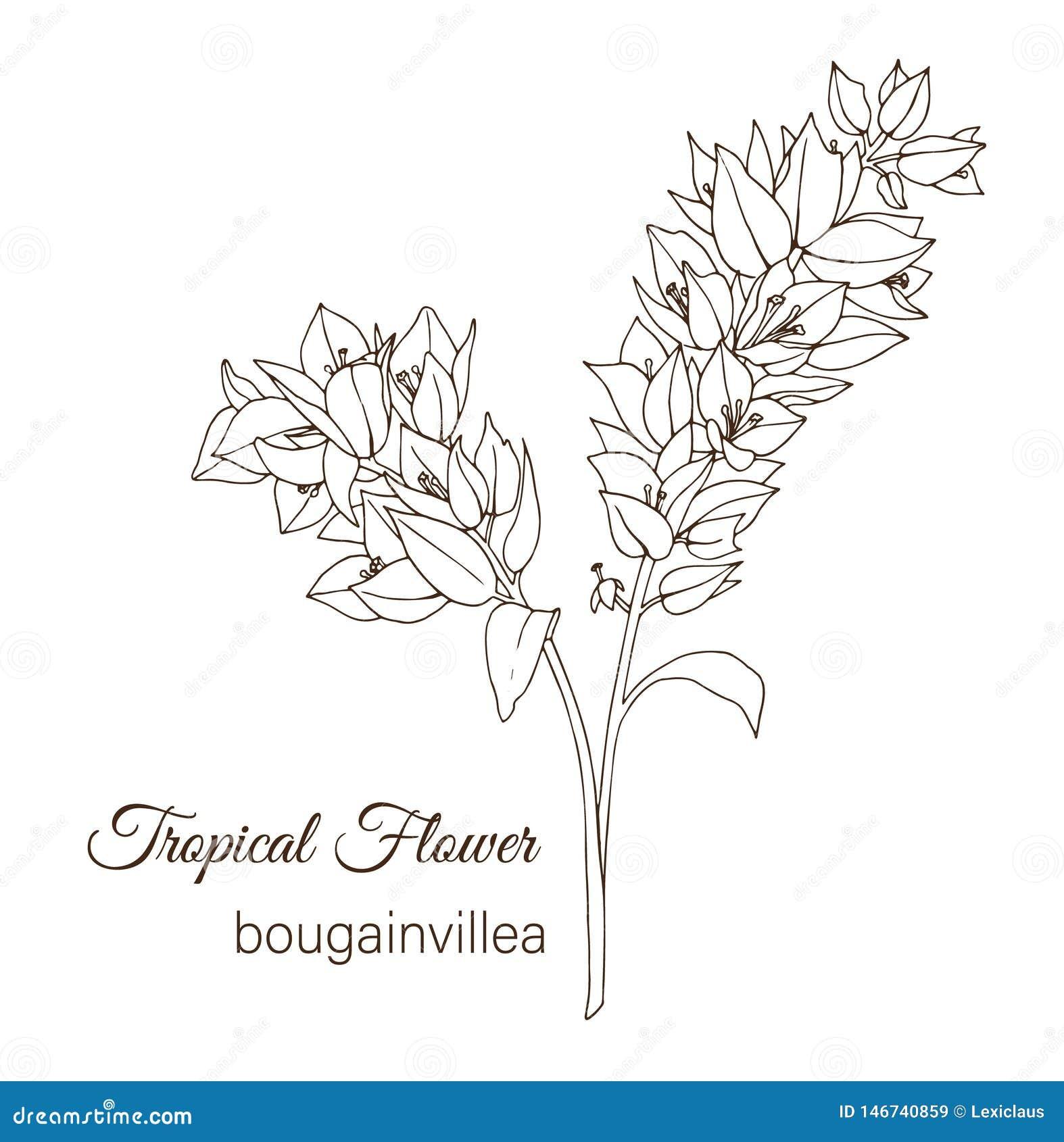 Vectorillustratie van tropische die bloem op witte achtergrond wordt geïsoleerd