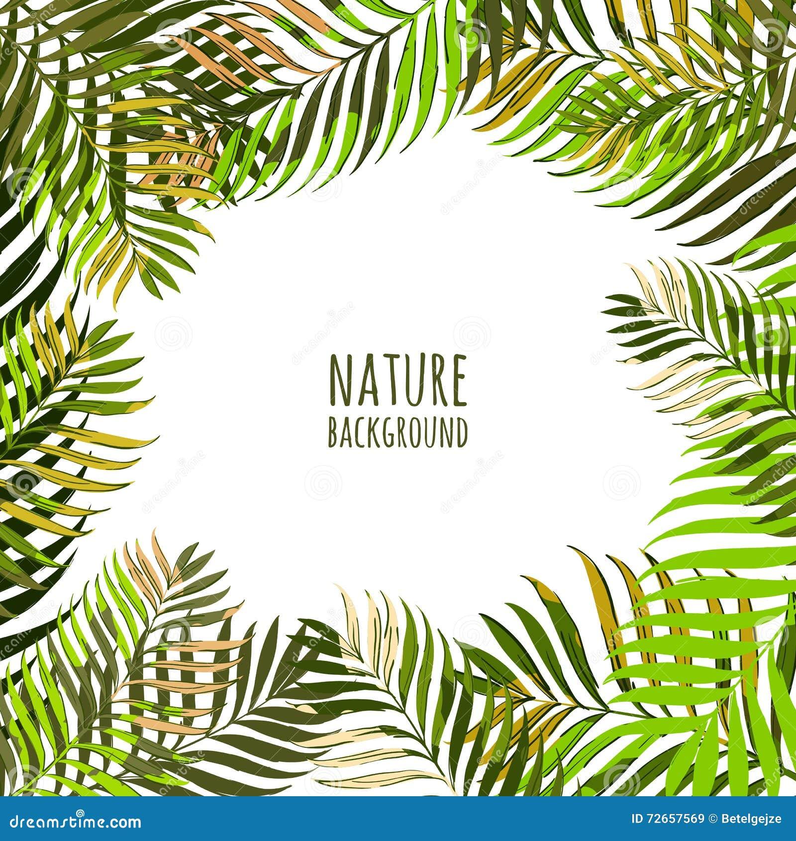 Vectorkader met kokosnotenpalmbladen Bloemen de zomerachtergrond met tropische groene bladeren