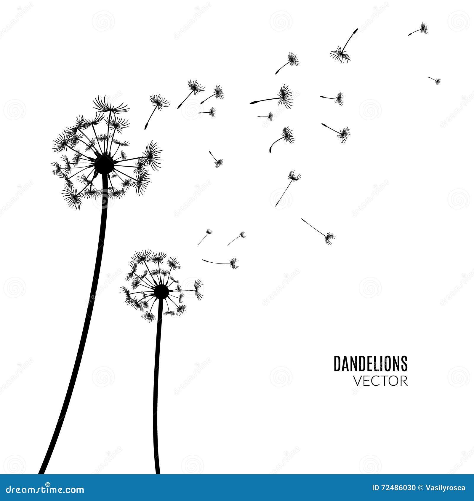 Vectorpaardebloemsilhouet De vliegende zwarte van paardebloemknoppen op wit
