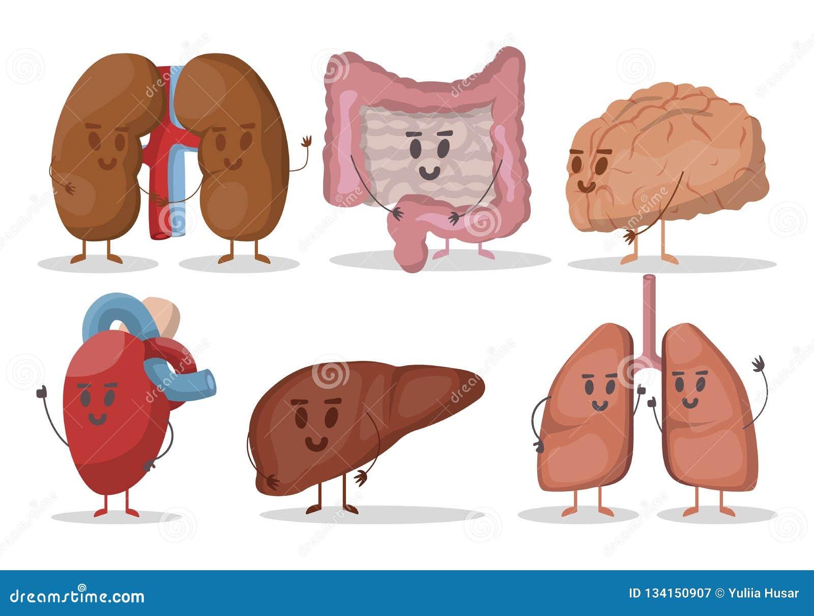 Vectorreeks menselijke interne organenillustraties Hart, longen, nieren, lever, hersenen, maag Glimlachende karakters