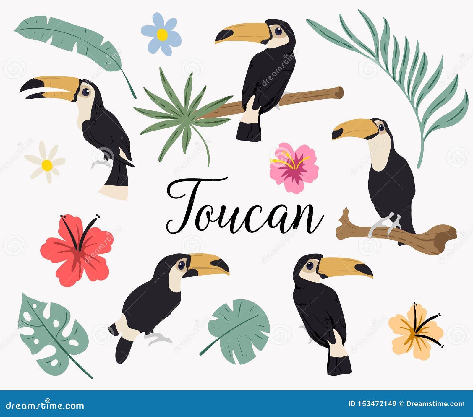 Vectorreeks toekanvogels op tropische takken met bladeren en bloemen Vectorreeks tropische bladeren Palm, monstera, banaan