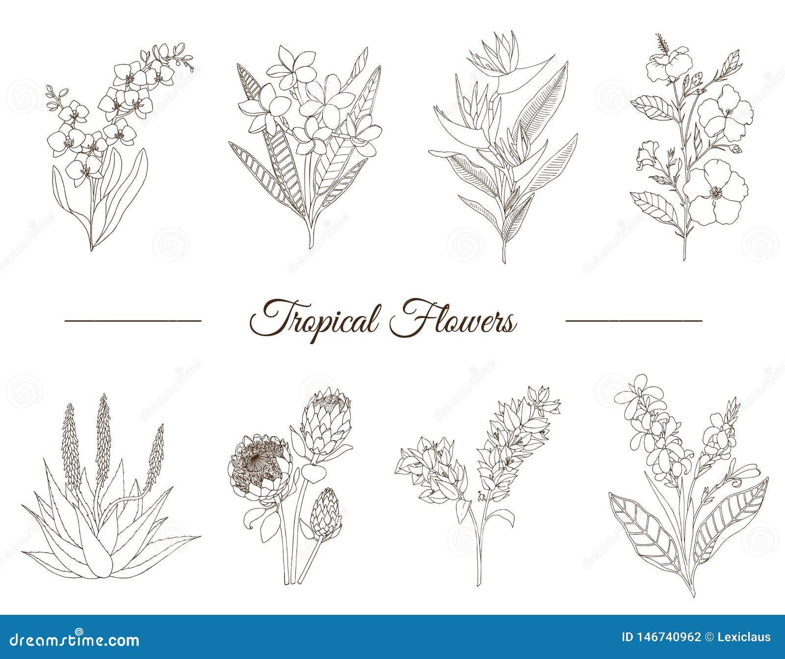 Vectorreeks tropische bloemen die op witte achtergrond wordt geïsoleerd