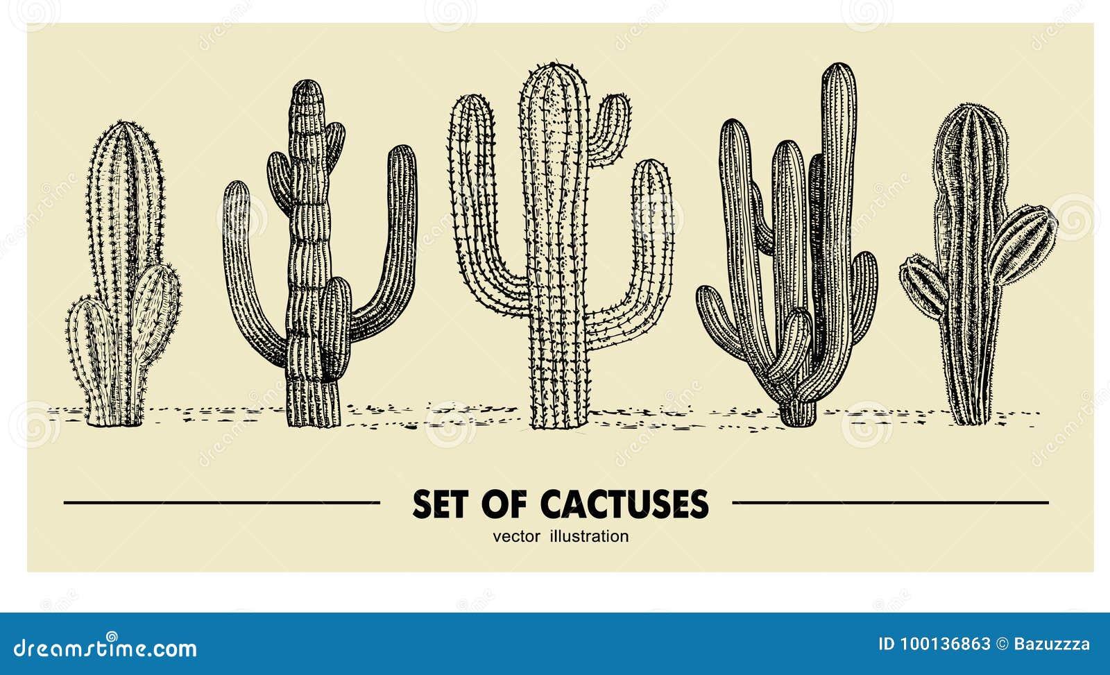 Vectorreeks van hand getrokken cactus Schetsillustratie Verschillende cactussen in zwart-wit stijl