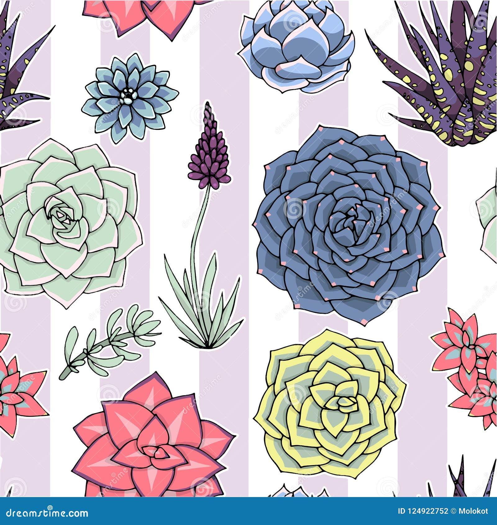 Vectorsucculents naadloos patroon Succulent ornament naughty