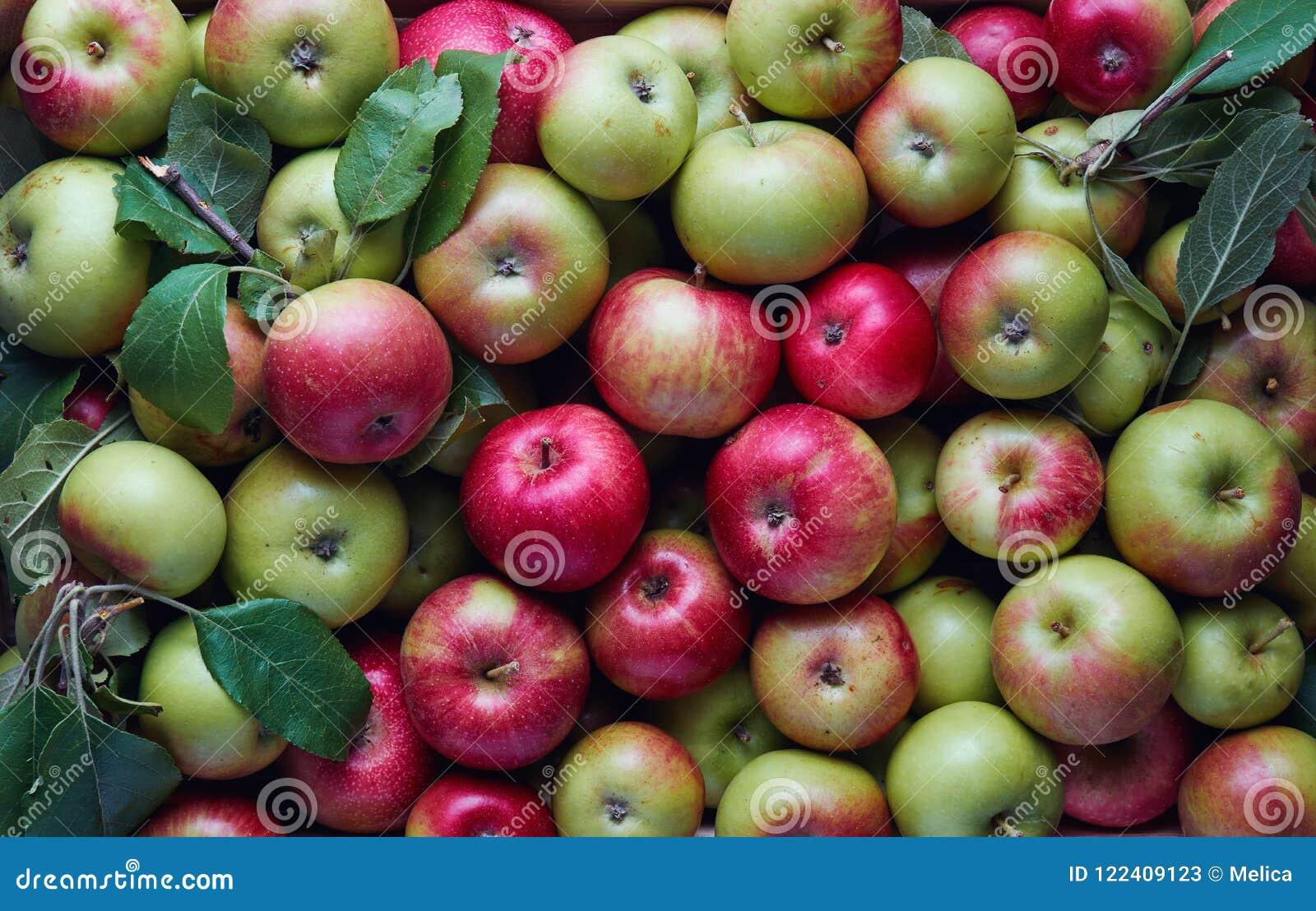 Veel appelen in een krat