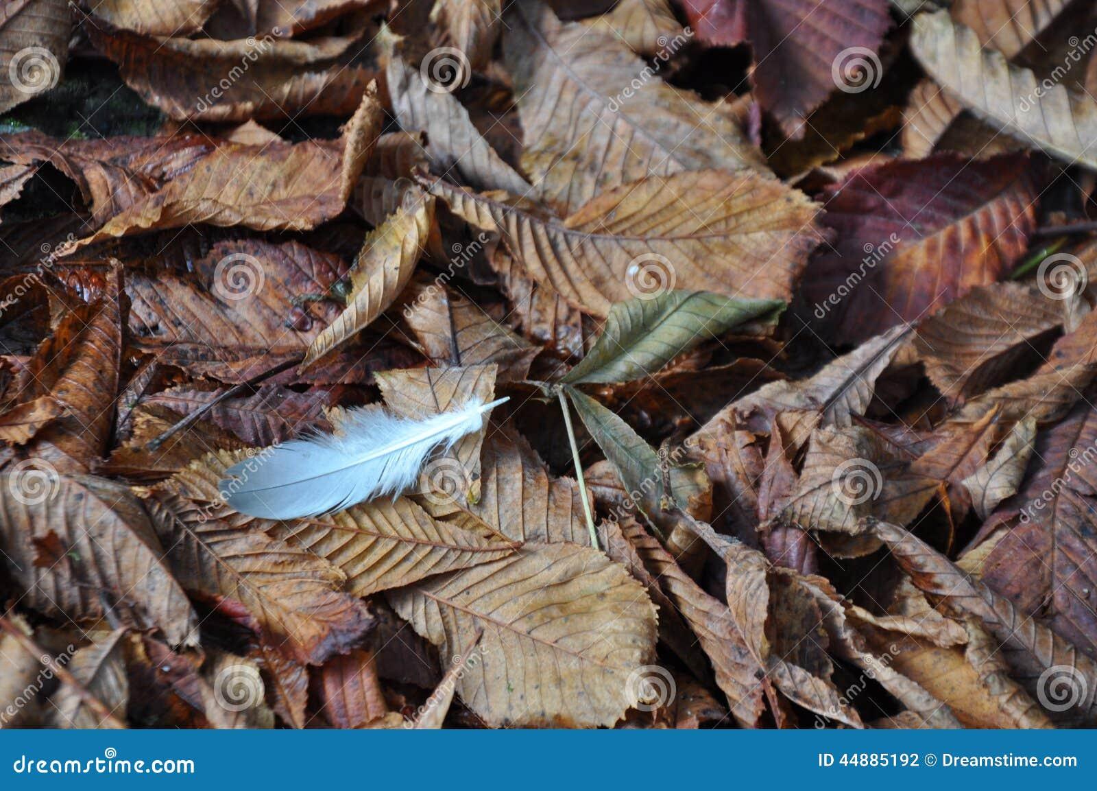 Veer op de bruine bladeren van de de Herfstdaling