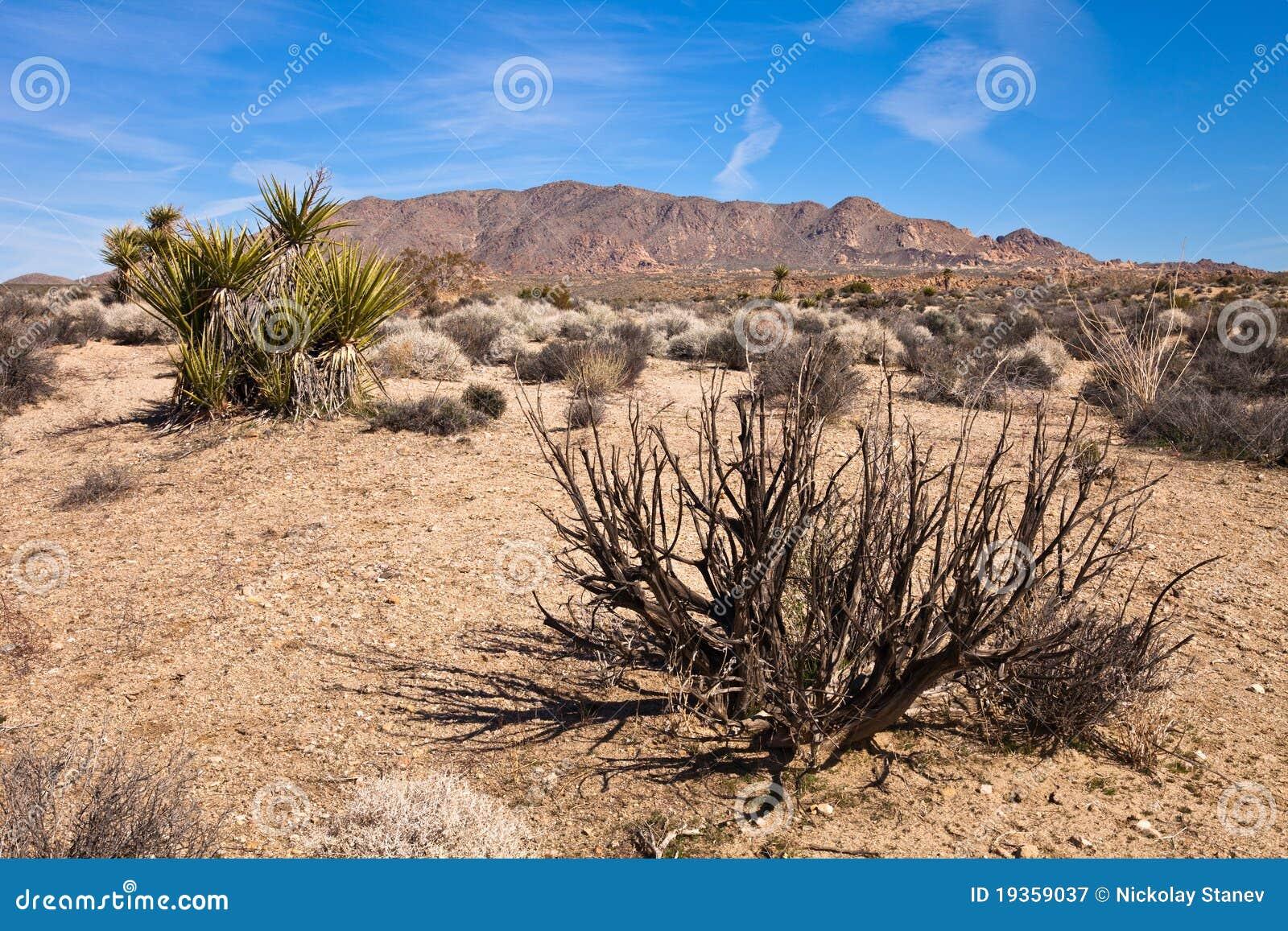 Vegetação do deserto